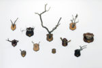 Taxonomic Trophies (2005 - ongoing), Meessen De Clercq, Brussels, Belgium, 2010 (photo: Philippe de Gobert)